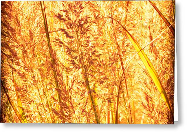 Autumns Passion Greeting Card by Bob Orsillo