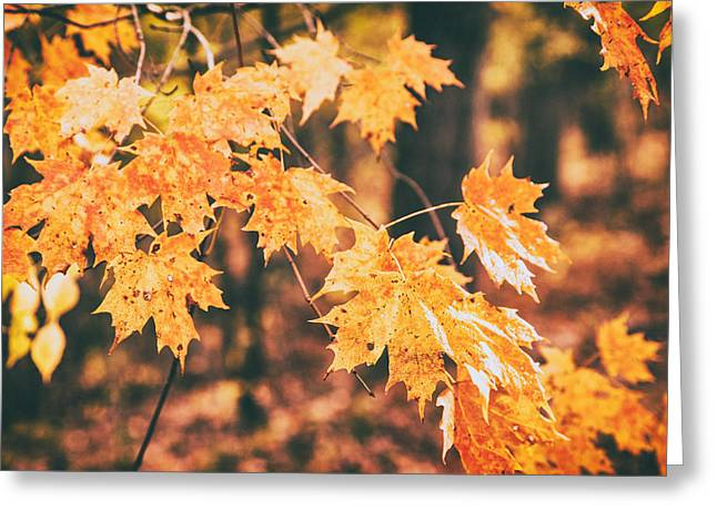 Colors Of Autumn Greeting Cards - Autumns Patience Greeting Card by Karol  Livote