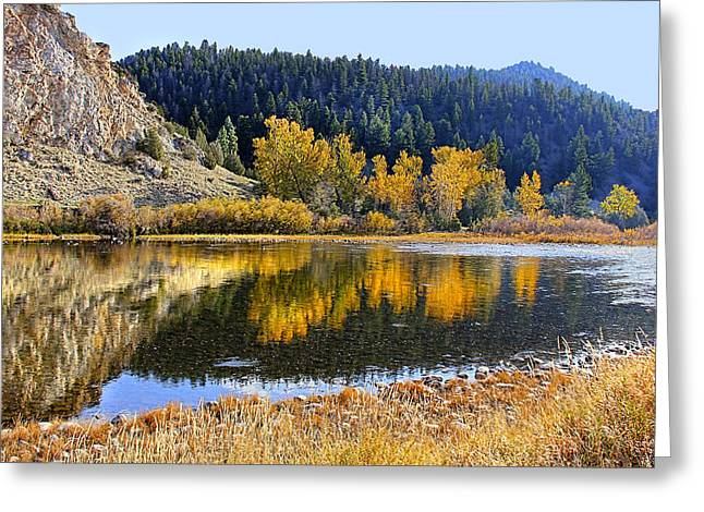 Fir Trees Greeting Cards - Autumns Reflections Big Hole River Montana Greeting Card by Jennie Marie Schell