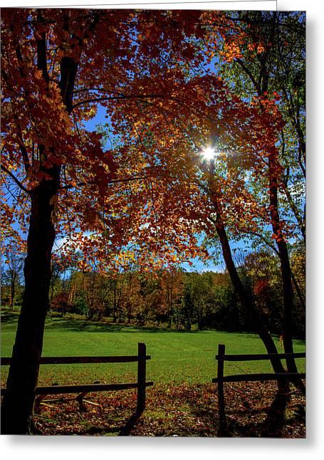Woodbury Greeting Cards - Autumns Shine Greeting Card by Karol  Livote