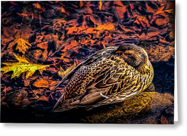 Mallards Greeting Cards - Autumns Sleepy Duck Greeting Card by Bob Orsillo