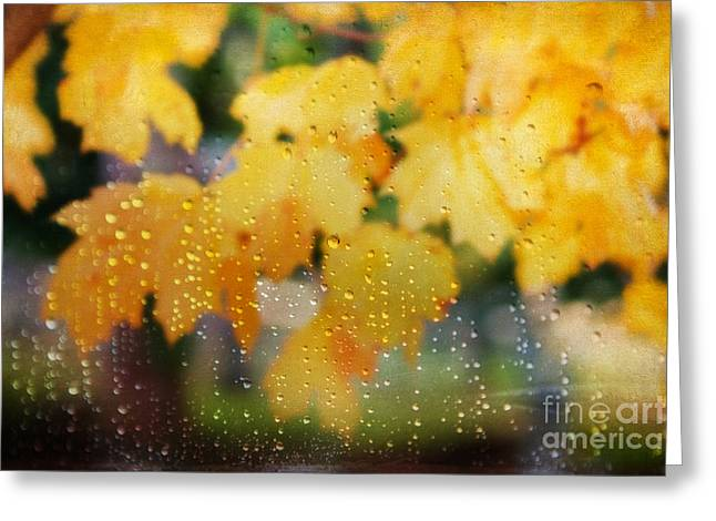 Dewdrops Greeting Cards - Autumns Tears Greeting Card by Darren Fisher