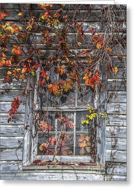 Change Of Seasons Greeting Cards - Autumns Window Curtains Greeting Card by Terry Rowe