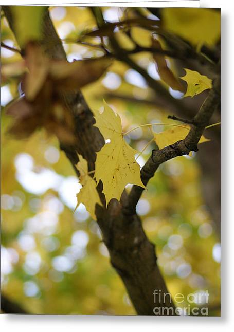Turning Leaves Greeting Cards - Autumns Wondrous Colors 1 Greeting Card by Carol Lynch