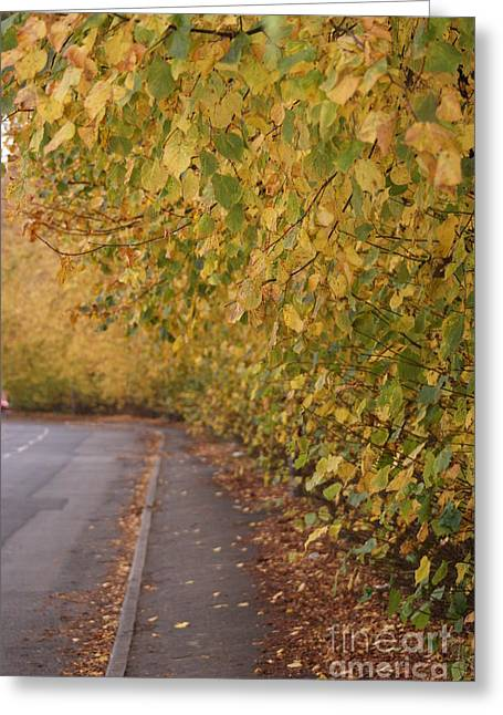 Turning Leaves Greeting Cards - Autumns Wondrous Colors 7 Greeting Card by Carol Lynch