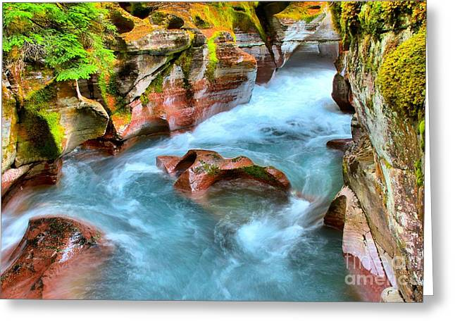 West Glacier Greeting Cards - Avalanche Creek Greeting Card by Adam Jewell