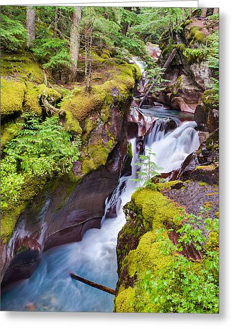 West Glacier Greeting Cards - Avalanche Gorge 3 of 4 Greeting Card by Adam Mateo Fierro