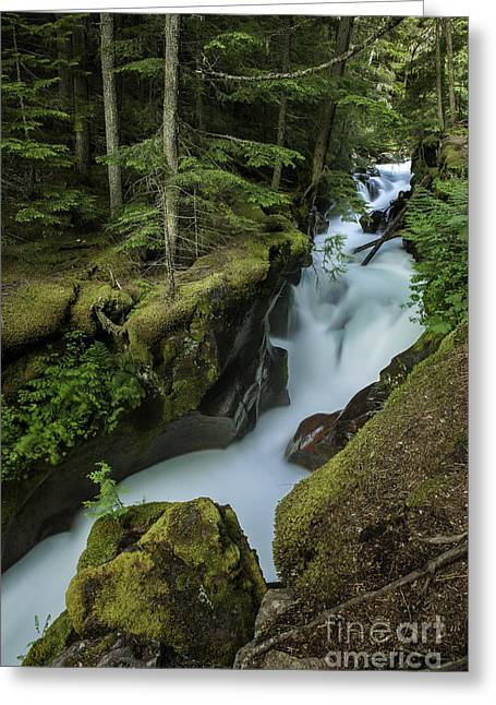 Red Cedar Greeting Cards - Avalanche Creek under the Giant Cedars Greeting Card by Thomas Schoeller