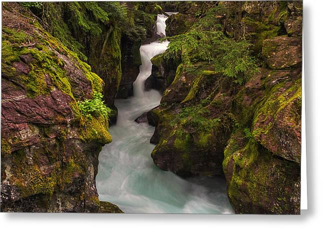 Moss Photographs Greeting Cards - Avalanche Falls Greeting Card by Mark Kiver