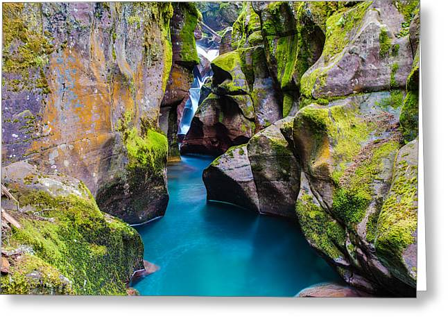 West Glacier Greeting Cards - Avalanche Gorge 1 of 4 Greeting Card by Adam Mateo Fierro