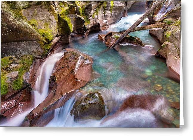 West Glacier Greeting Cards - Avalanche Gorge 4 of 4 Greeting Card by Adam Mateo Fierro