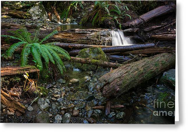 Port Renfrew Greeting Cards - Avatar Grove Creek Bed Greeting Card by Carrie Cole