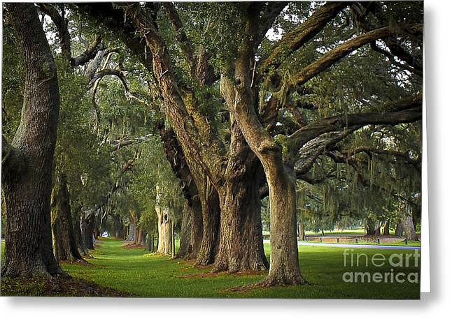 Cotton Club Greeting Cards - Avenue Of Oaks on St Simons Island Greeting Card by Reid Callaway