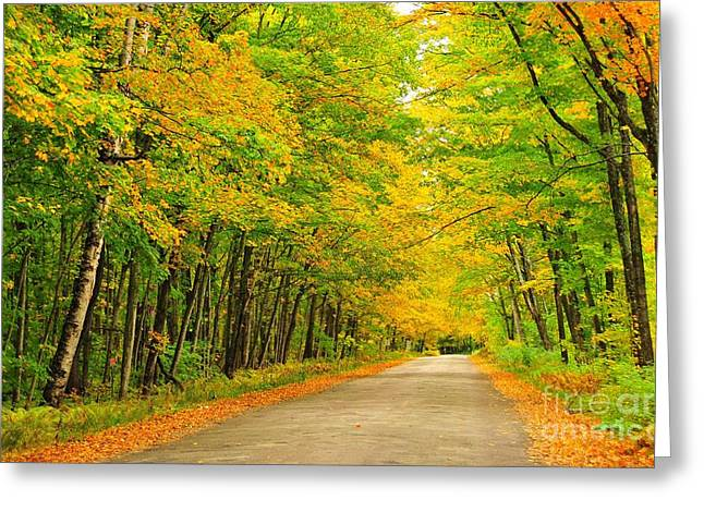 Fall Trees Greeting Cards - Avenue of Autumn Trees Greeting Card by Terri Gostola