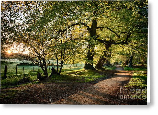 May Morning Greeting Cards - Avenue of Light Greeting Card by Tim Gainey
