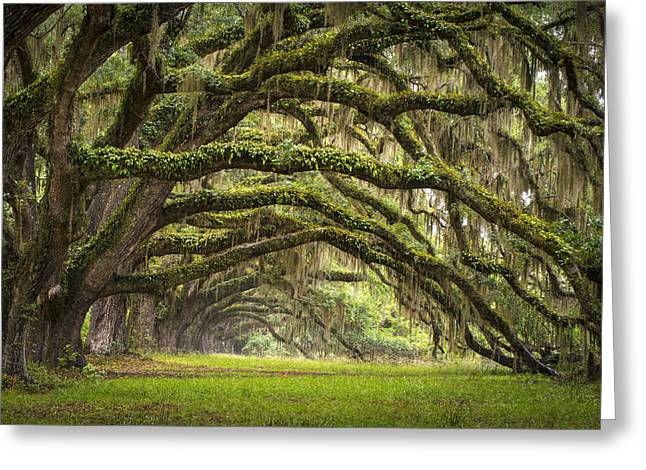 Prints Photographs Greeting Cards - Avenue of Oaks - Charleston SC Plantation Live Oak Trees Forest Landscape Greeting Card by Dave Allen