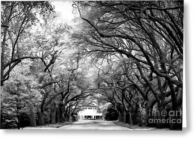 Old School Houses Greeting Cards - Avenue of Oaks Greeting Card by John Rizzuto