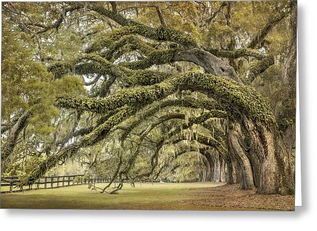 South Carolina Greeting Cards - Avenue of Oaks Greeting Card by Magda  Bognar