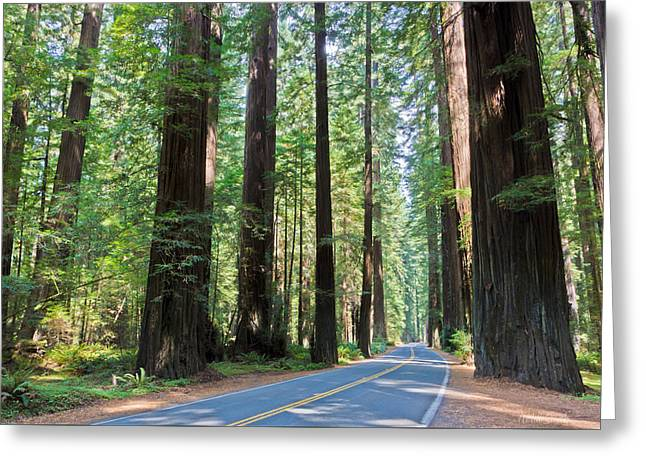 Old Growth Greeting Cards - Avenue Of The Giants Greeting Card by Heidi Smith