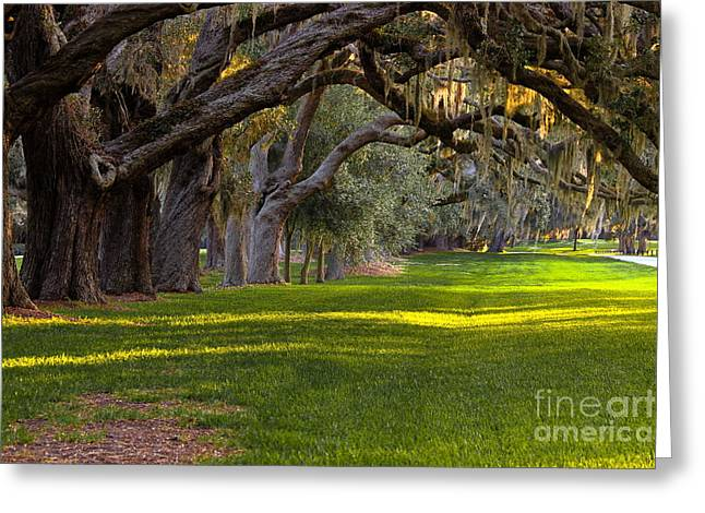 Cotton Club Greeting Cards - Avenue of the Oaks 2 on St Simons Island GA Greeting Card by Reid Callaway