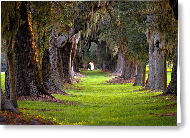 Cotton Club Greeting Cards - Avenue of the Oaks 4 on St Simons Island GA Greeting Card by Reid Callaway