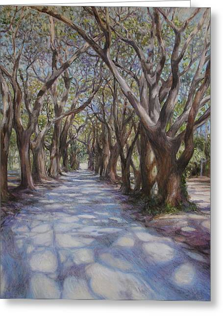 St Helena Island Greeting Cards - Avenue of the Oaks Greeting Card by Henry David Potwin