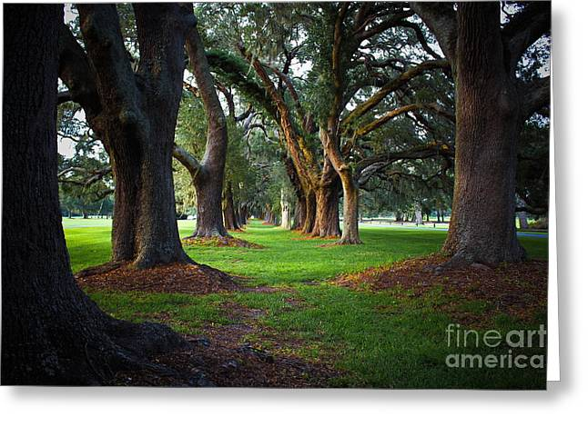 Cotton Club Greeting Cards - Avenue of the Oaks on St Simons Island GA Greeting Card by Reid Callaway