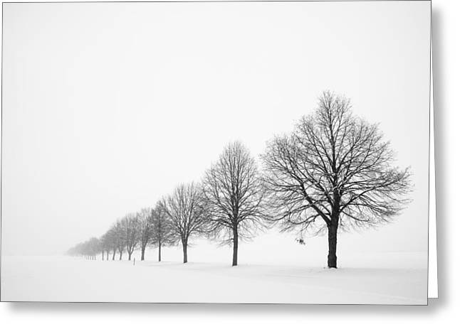 Peaceful Scenery Greeting Cards - Avenue with row of trees in winter Greeting Card by Matthias Hauser