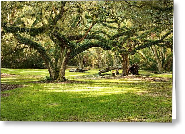 Moss-covered Greeting Cards - Avery Island Oaks Greeting Card by Scott Pellegrin