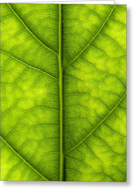 Avocado Green Greeting Cards - Avocado leaf Greeting Card by Gary Eason