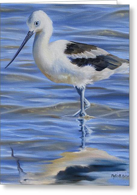 Wadingbird Greeting Cards - Avocet Greeting Card by Phyllis Beiser