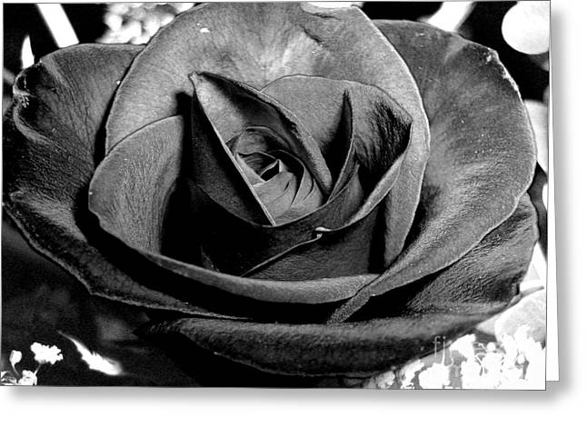 Bittersweet Greeting Cards - Awakened Black Rose Greeting Card by Nina Ficur Feenan