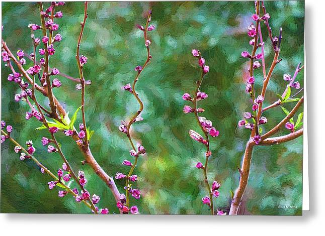 Paint Photograph Paintings Greeting Cards - Awakening Greeting Card by Angela A Stanton