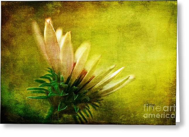 Daisy Bud Greeting Cards - Awakening Greeting Card by Lois Bryan