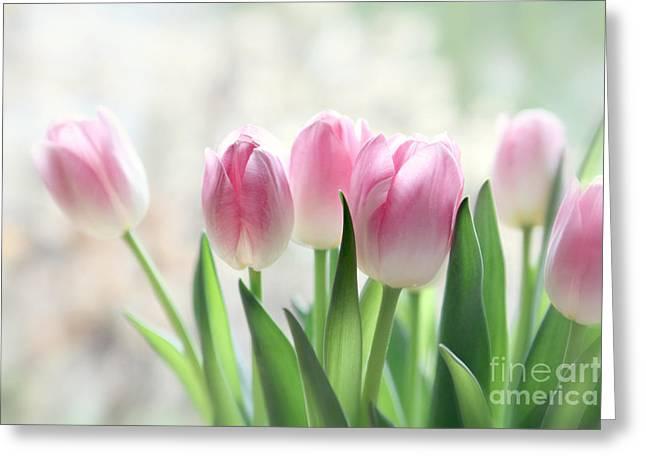 Pastel Green Greeting Cards - Awakening- Pale Pink Tulips Greeting Card by Sylvia Cook