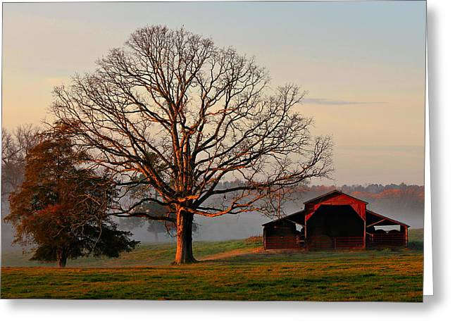 Sunrise Oak Red Barn Misty Morning Greeting Card by Reid Callaway