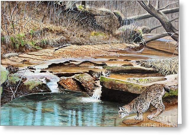Bobcats Greeting Cards - Away From Cover - Bobcat Greeting Card by Phillip  Powell