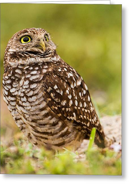 Watching Greeting Cards - Awe Inspiring Owl Greeting Card by Andres Leon