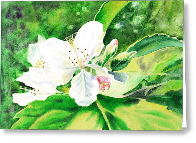 Apple Paintings Greeting Cards - Awesome Apple Blossoms Greeting Card by Irina Sztukowski