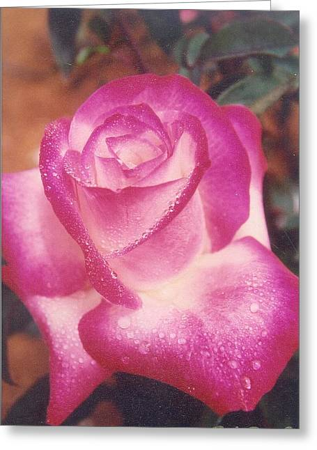 Robert Bray Greeting Cards - Awesome Rose Pristine Greeting Card by Robert Bray