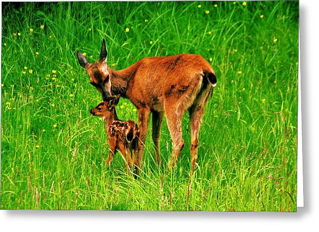 Sweet Kiss Greeting Cards - Aww Mom Greeting Card by Benjamin Yeager