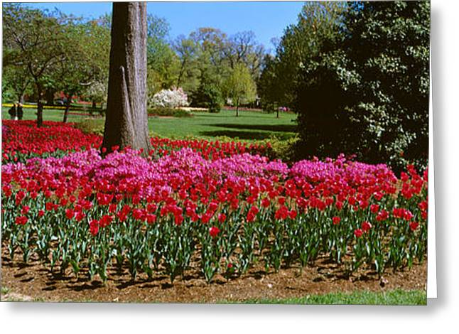 Garden Scene Photographs Greeting Cards - Azalea And Tulip Flowers In A Park Greeting Card by Panoramic Images
