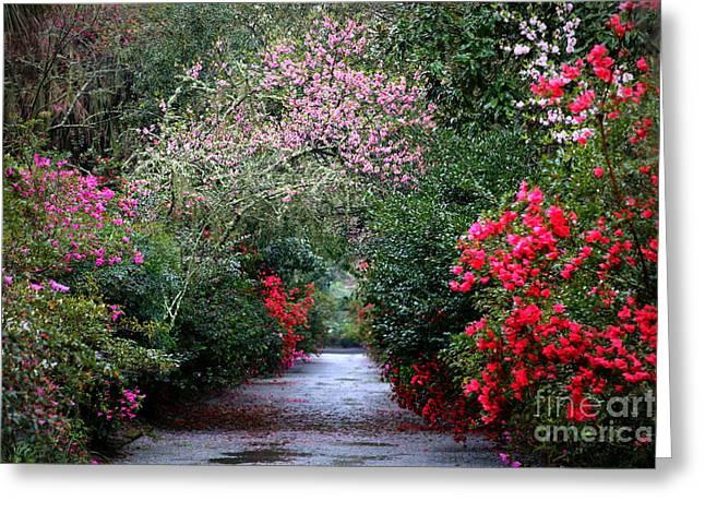 Charleston Pathway Greeting Cards - Azalea Arch Greeting Card by Carol Groenen
