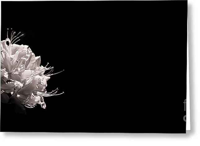 Canvas Floral Greeting Cards - Azalea Black and White Floral I Greeting Card by Holly Martin