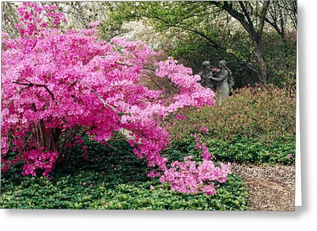 Garden Scene Photographs Greeting Cards - Azalea Flowers In A Garden, Garden Greeting Card by Panoramic Images