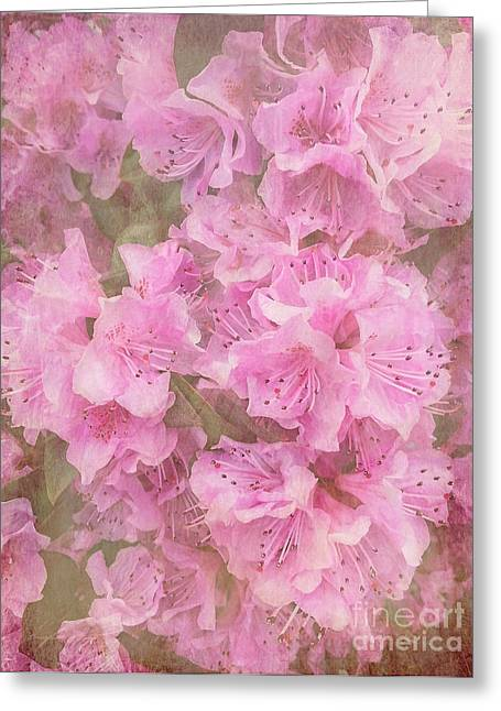 Azalias Greeting Cards - Azalea Textured Greeting Card by Arlene Carmel
