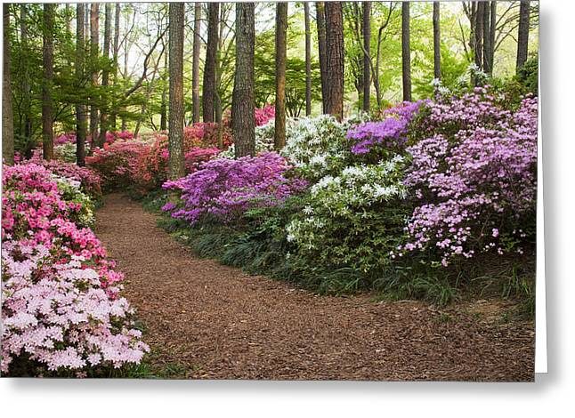 Chatham County Greeting Cards - Azalea Trail Greeting Card by Eggers   Photography