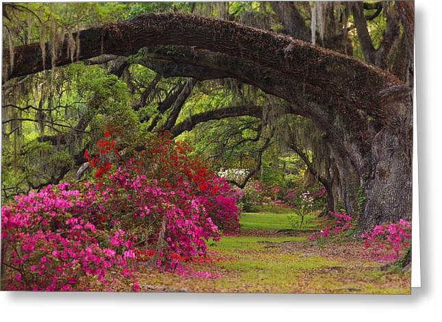 Plantation Greeting Cards - Azaleas and Oaks Greeting Card by Mike Lang