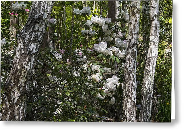 Azaleas Greeting Cards - Azaleas In The Trees Greeting Card by Garry Gay