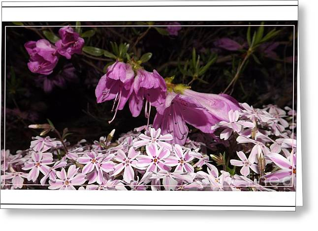 Azalias Greeting Cards - Azalia and Phlox Friends Greeting Card by Sara  Raber